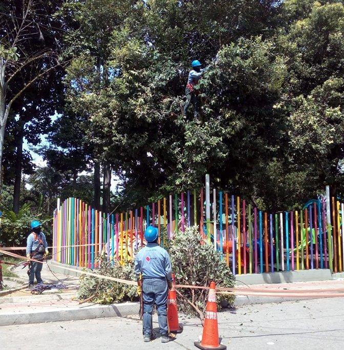 forestales-essa_4